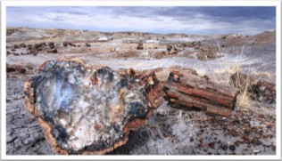 petrified-forest-293076_960_720