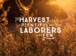 harvest_1x